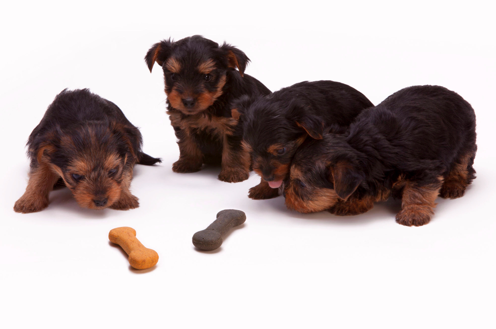 Apple Dog Treats Are an Excellent Source of Vitamins