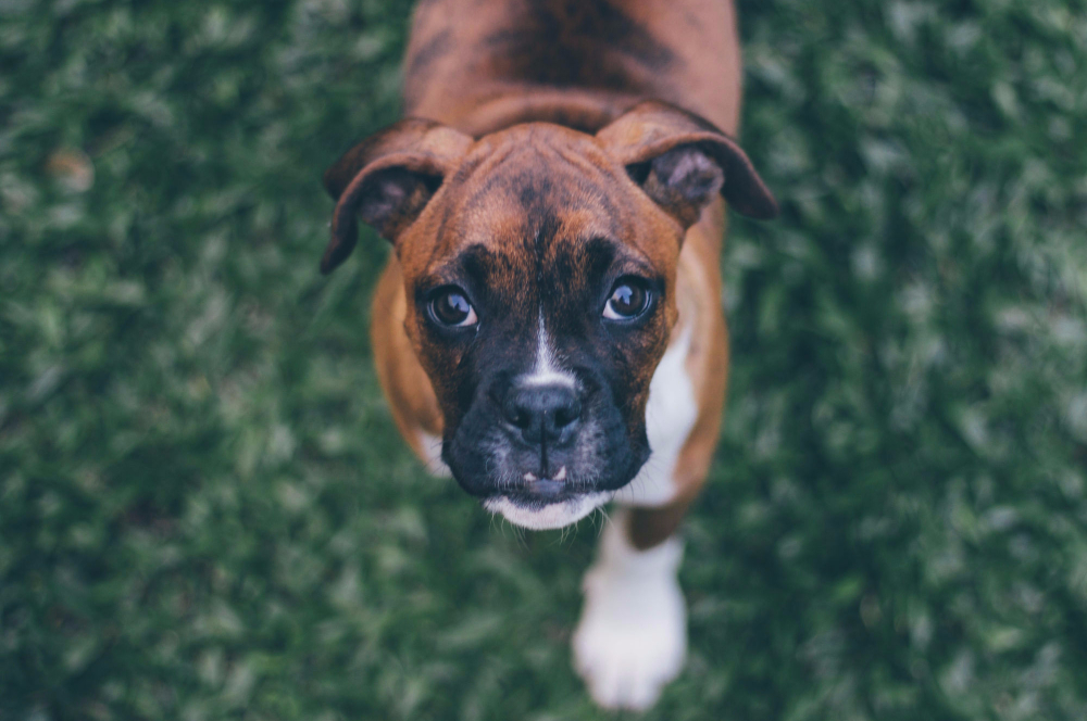 Ethoxyquin: Is It Safe For You And Your Pets?