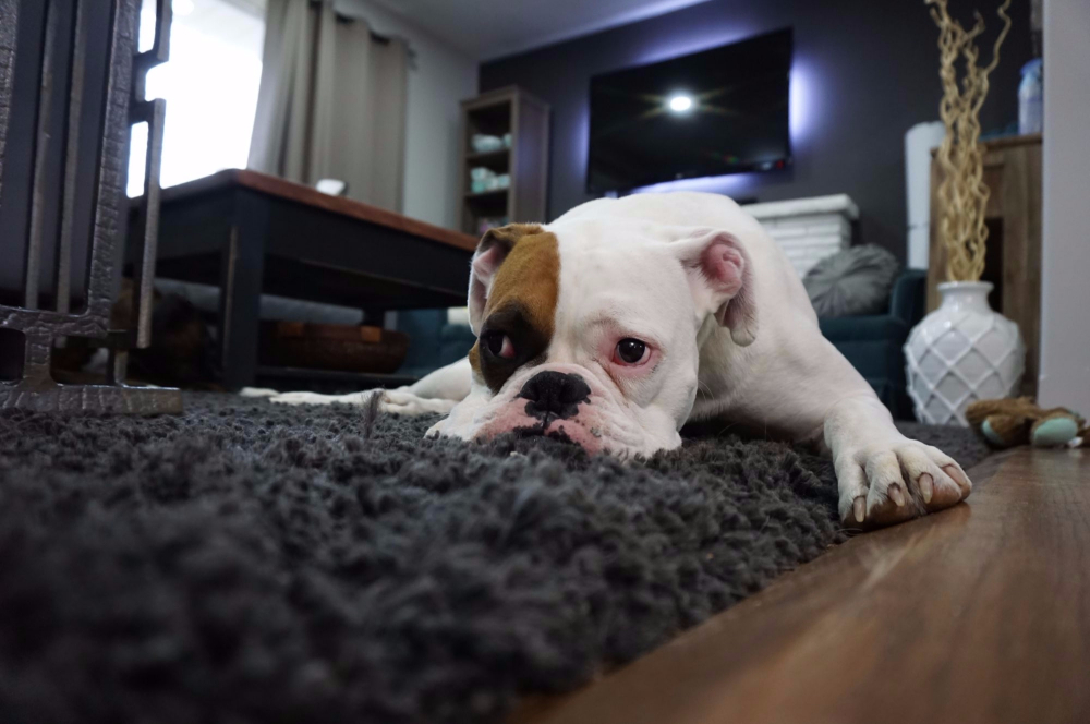 Fat Puppies: Is Your Puppy Tubby or Overweight?