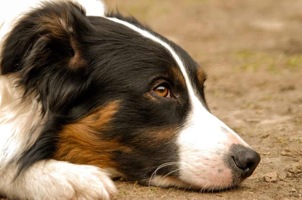 Heartworm Products: Avoid a Heartbreaking Diagnosis