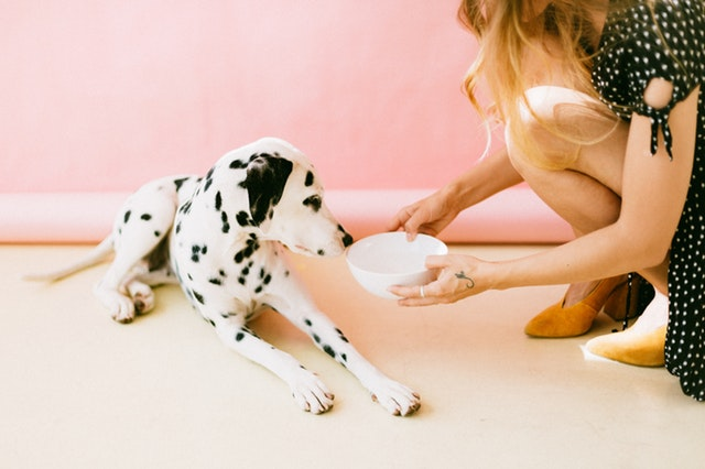 Best Food For Dog With  Sensitive Stomach