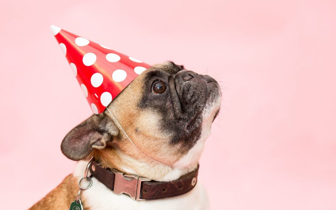 Dog Birthday Cake Recipes for Good Boys Only