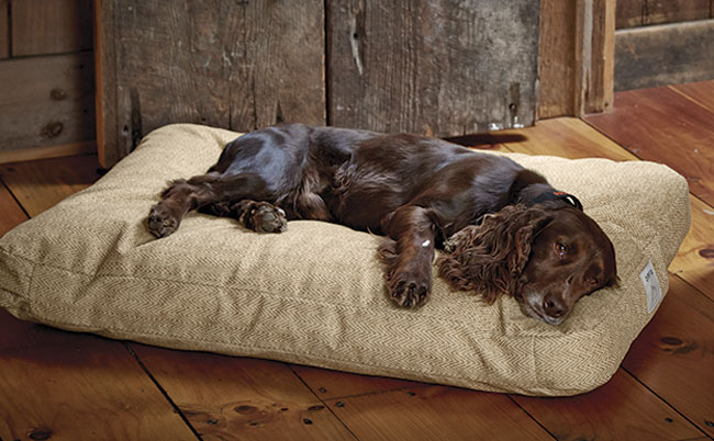 This dog bed is chew resistant! It resembles a large couch cushion or small futon mattress