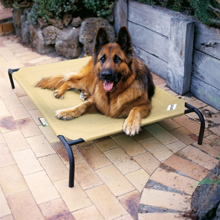 Raised beds are the best pet beds for hot climate this is a cot style pet bed