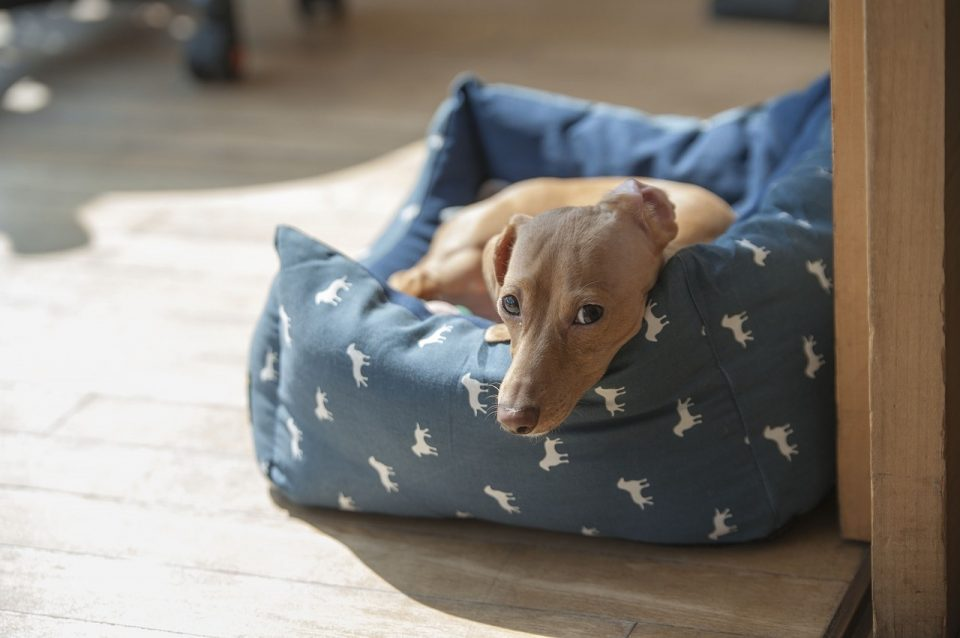 The Best Pet Beds You Can Buy Online for Your Dog