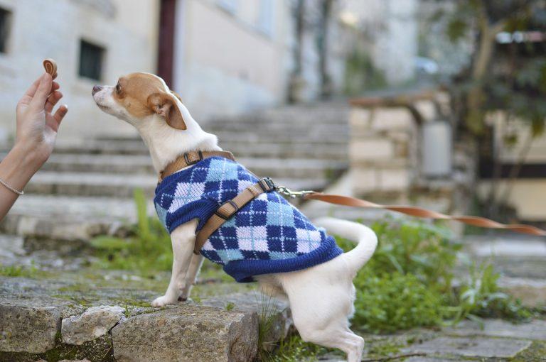 Bes Dog Training Tools