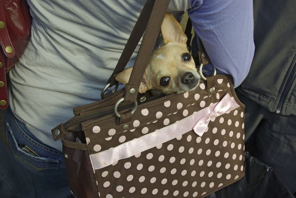 The Best Pet Carriers for Your Beloved Animals Are Here
