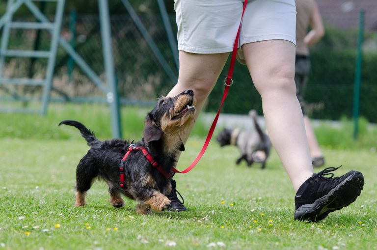 Walk your pooch is an important part of potty training puppy.
