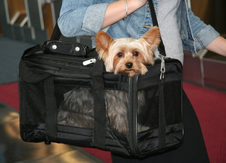 Take your small animal carrier with you wherever you go.