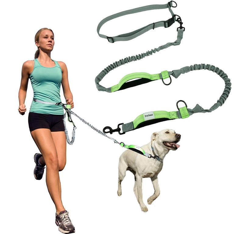 best dog leash hands free