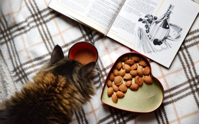 Can Cats Eat Chocolate? What Your Kitty Can And Can't Eat