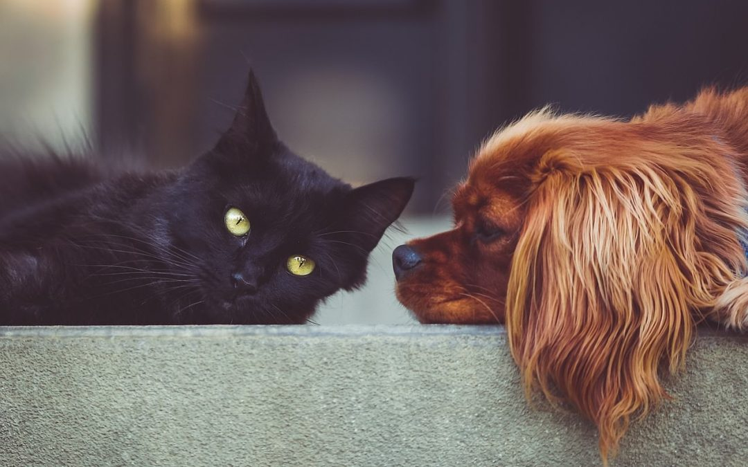 Why Do Dogs Eat Cat Poop? Weird Behavior Explained