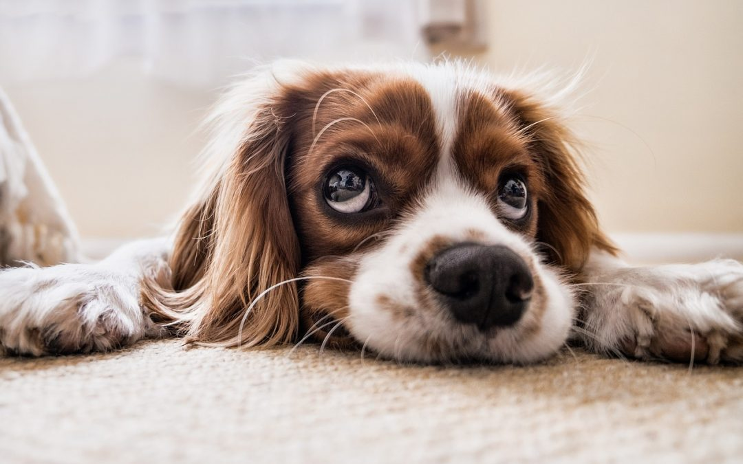 Dog Constipation: What Are The Causes And Ways To Relieve