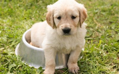 Best Wet Dog Food Review for All Breeds