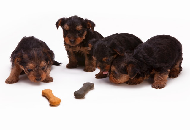 Puppy Teething Toys For Your Puppy: Top 10 Picks