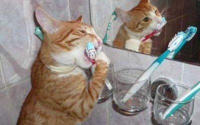 6 Remedies For Cat Bad Breath That Actually Work