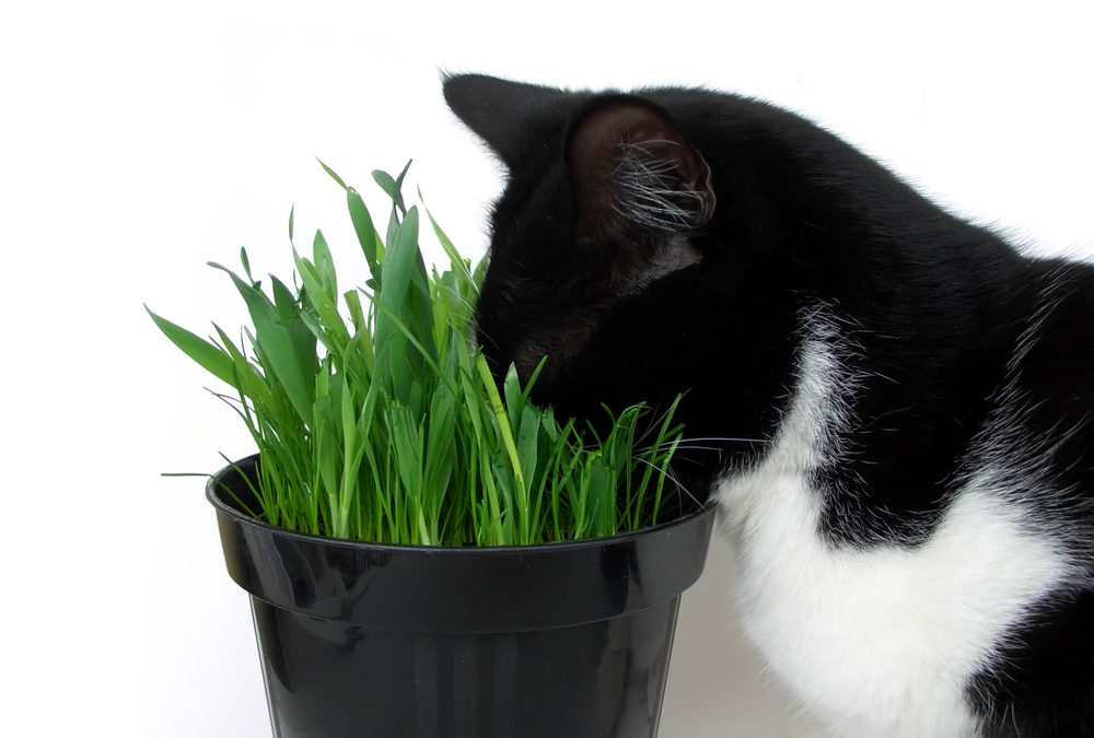 What Is Catnip? A Guide To Your Cat's Favorite Plant