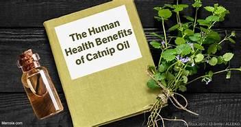 human benefits of catnip oil