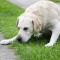 Why Is  Your Dog Vomiting Yellow And How To Manage It