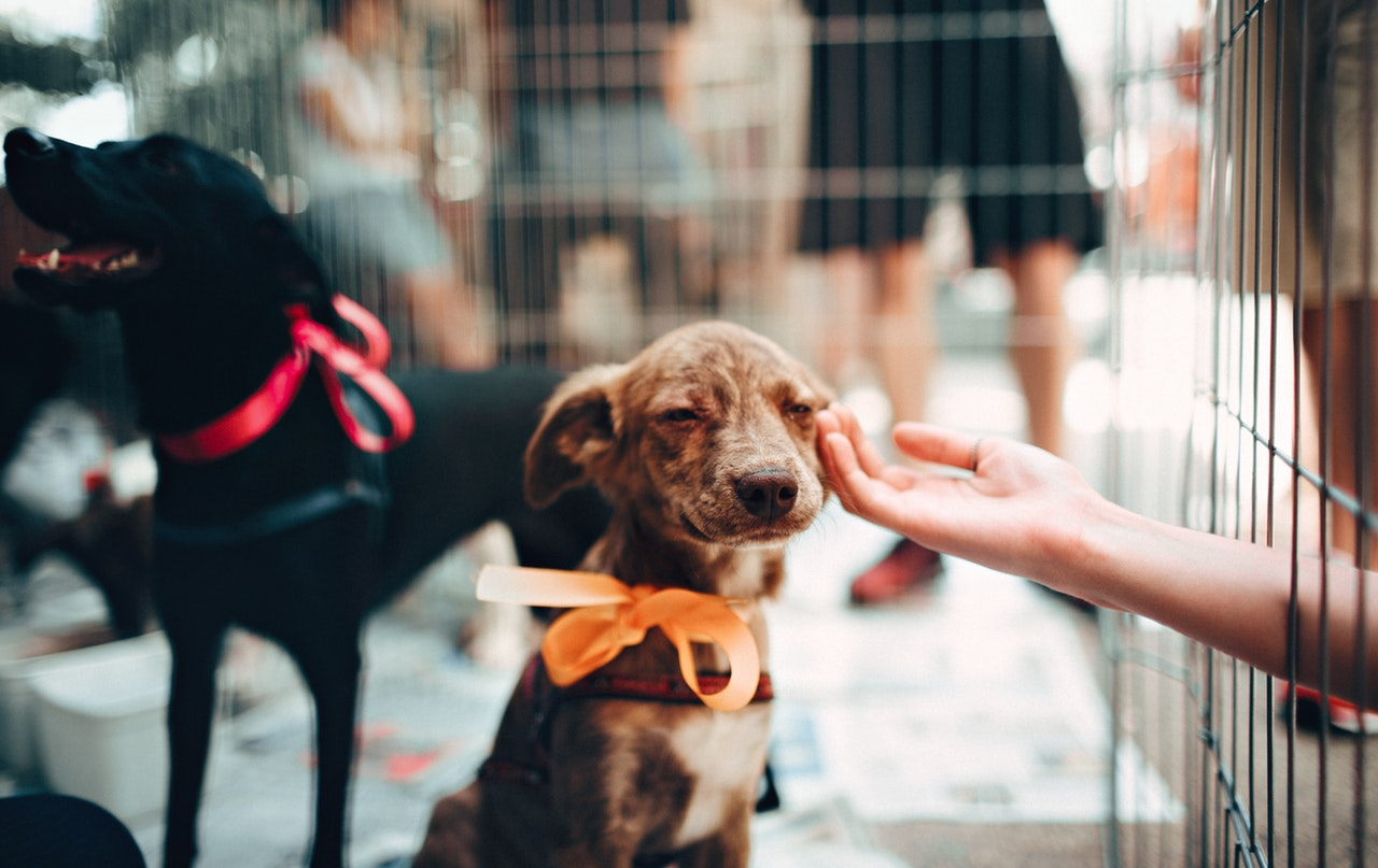 a person gently touching a small brown dog wearing orange ribbon inside a steel cage