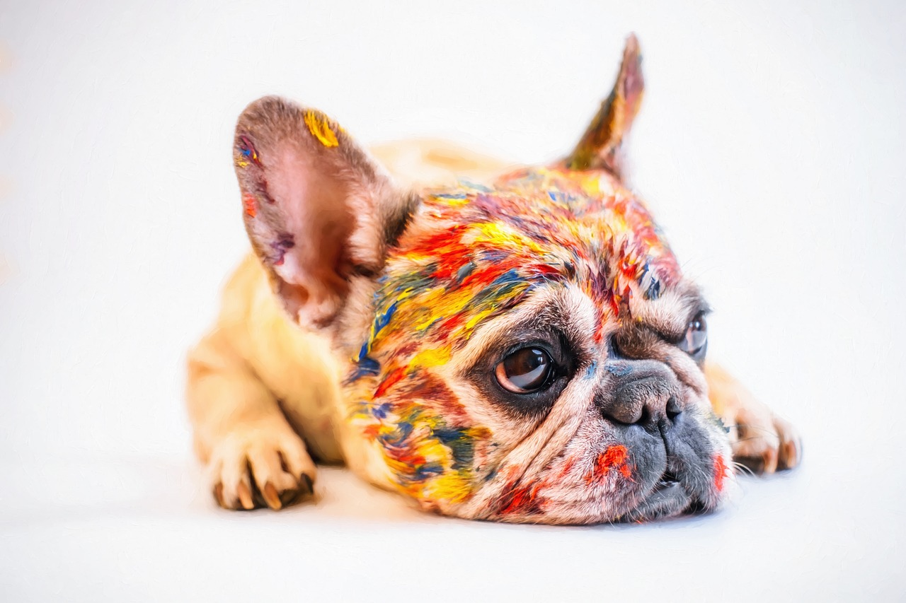 a French bulldog painted with different colors in its face