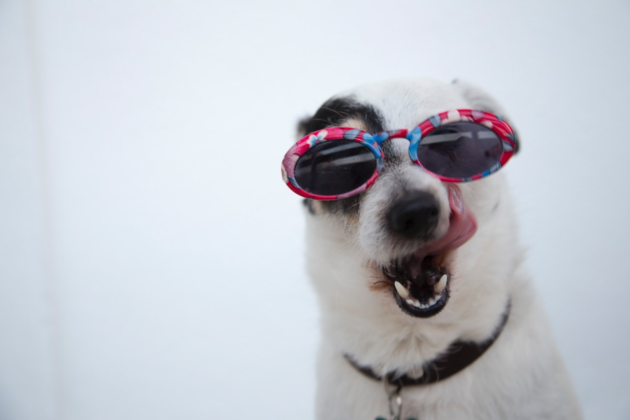 Dog wearing sunglasses with flowery frame