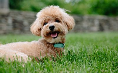 10 Best Puppy Food Brands That You Should Try