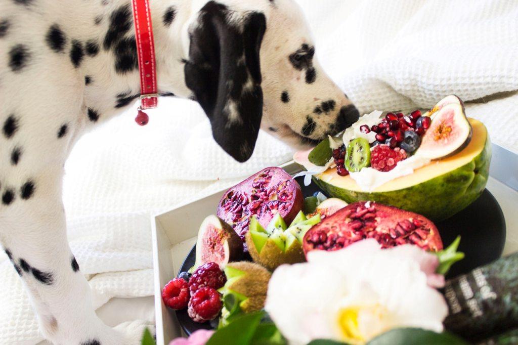 Dog eating fruits