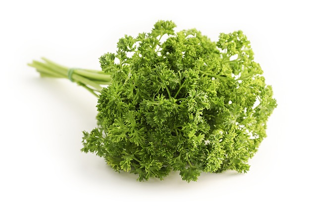parsley-curled-petroselinum-crispum