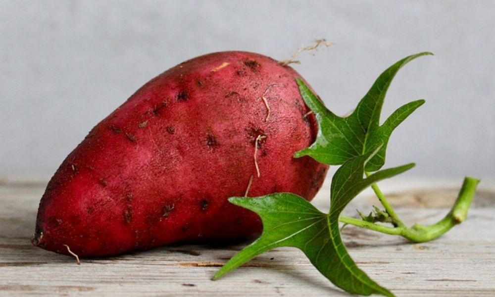 sweet-potato-food-vegetable-yam-