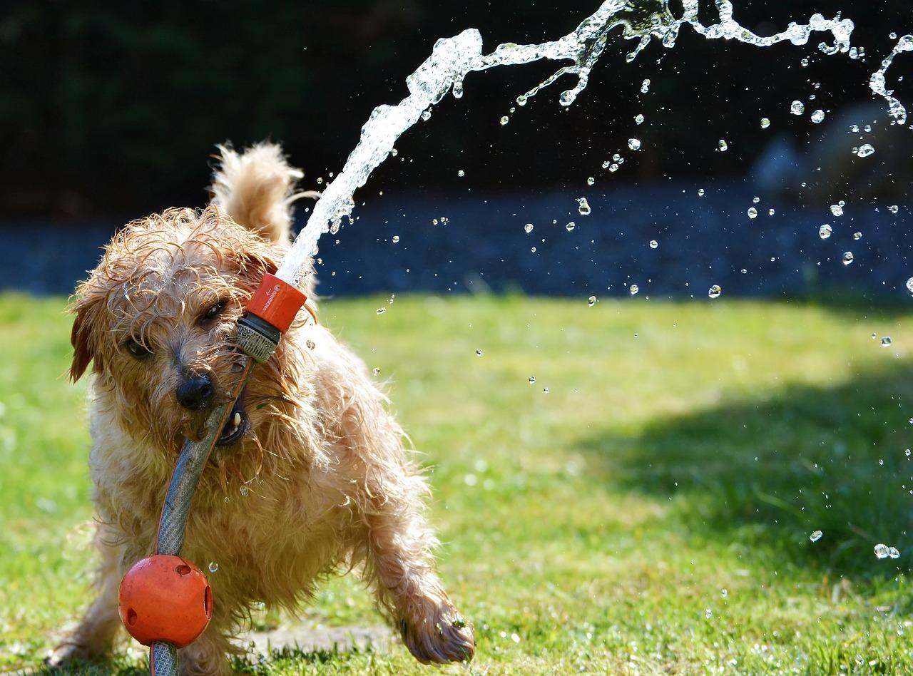 dog biting a hose